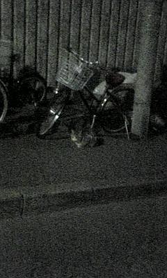 夜歩くぬこ